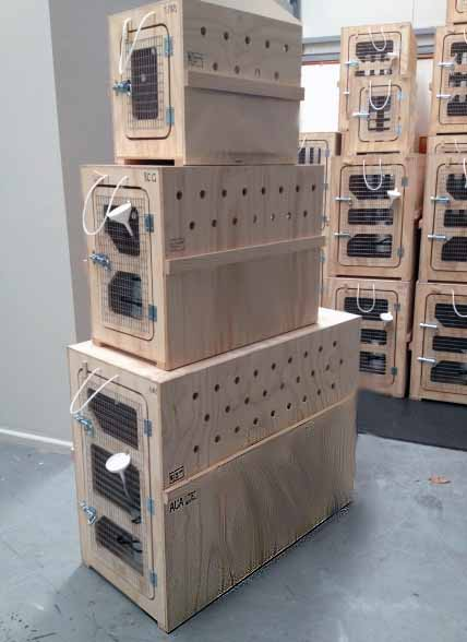 iata approved crates
